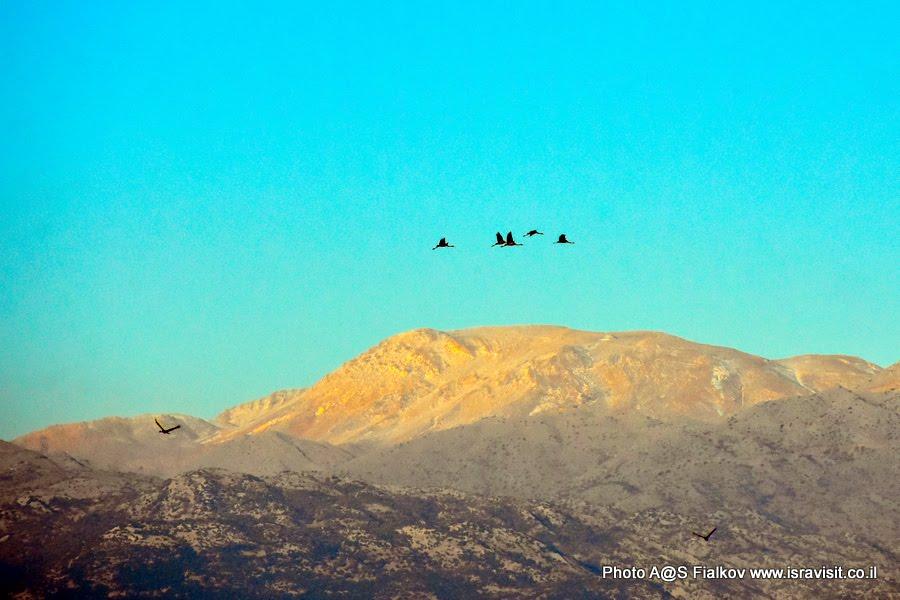 Журавли над горным массивом Антиливан. Экскурсия в Израиле в национальный заповедник на озеро Агмон Хула.