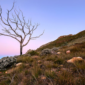 Tree of wonders by Juan Wernecke - Landscapes Mountains & Hills ( canon, mountain, cape, rock, landscape, 10-20mm, nature, tree, isolation, sigma, shadow, dark, africa, light, juan, orange, dawn., grass, 50d, dusk, winter, magenta, blue, horizontal, sunset, south, western, wernecke, town, sunrise, pink., hike, peninsula )