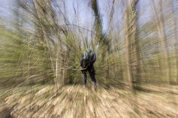 Il bosco di Miche