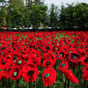 Lest We Forget by Glen John Terry  - Flowers Flower Arangements ( red, glenjohnterry, poppy, lest we forget, flowers,  )