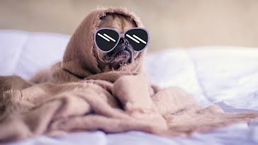 Puppy Incognito - Zoom Background template