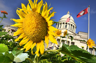Photo: Making Van Gogh Happy.  Arkansas State Capitol with Sunflower.  today, first day in the last week that we have not been treated to rolling greys or downright drenches.    #arkansas  #arkansasphotography  #sunflower