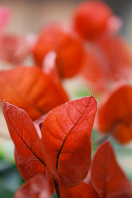 Red flames di lylli