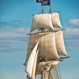 Tall Ships by Tom Whipple - Transportation Boats