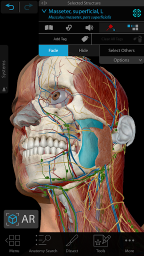 Human Anatomy Atlas 2021: Complete 3D Human Body screenshot for Android