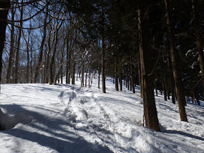 右下から林道と合流