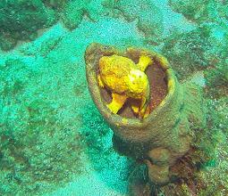 Photo: Longlure Frogfish