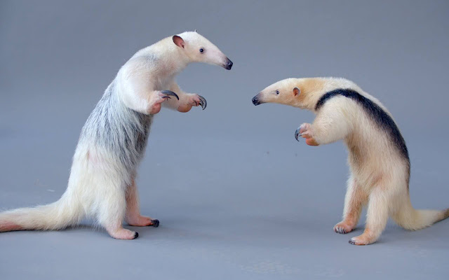 Anteater - New Tab in HD
