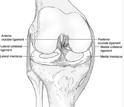 Knee Ligaments Review