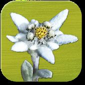 AlpineFlower Finder - Europe