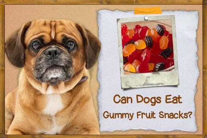 Can dogs eat fruit snacks