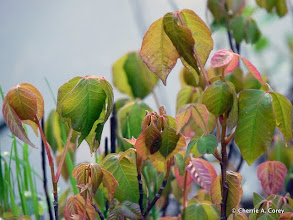 Photo: Poison Ivy - watch your step