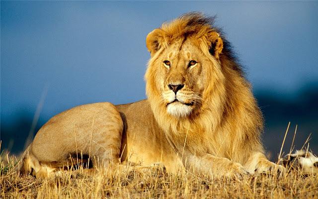 lion Themes & New Tab