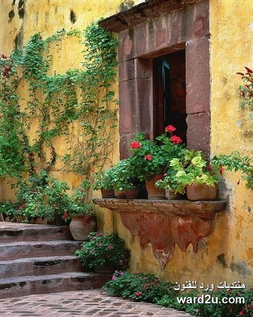 نوافذ وابواب مزينه بالورد فى لوحات رائعة