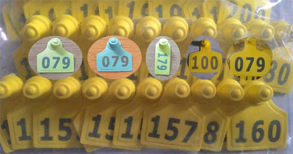 kìm bấm thẻ tai cho gia súc - thẻ đeo tai có số và không số dê bò heo - 1