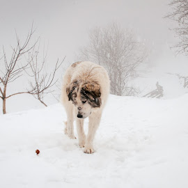 Lonely dog in the cold winter by Andrei Stefan - Animals - Dogs Portraits ( winter, cold, portrait, dog, landscape )