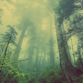 Deep Forest Atom Theme