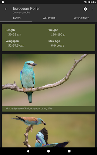 Little Bird Guide Europe