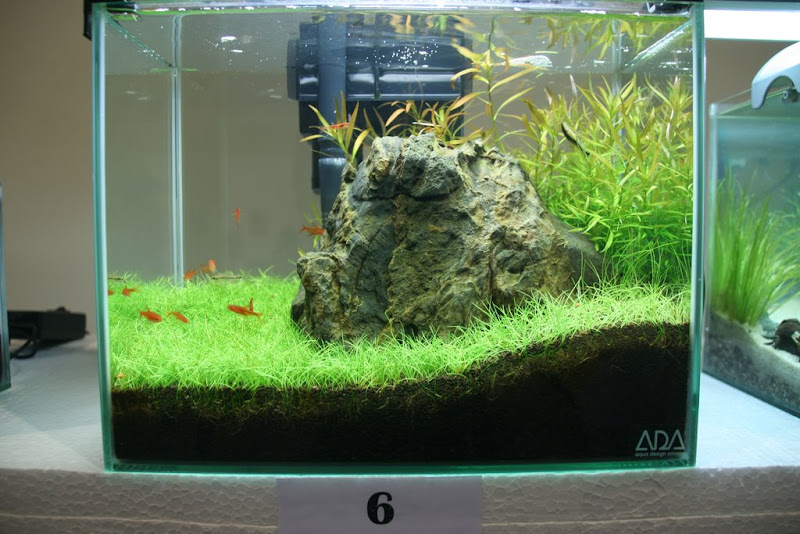 malaysian nano aquascaping competition 2008 results