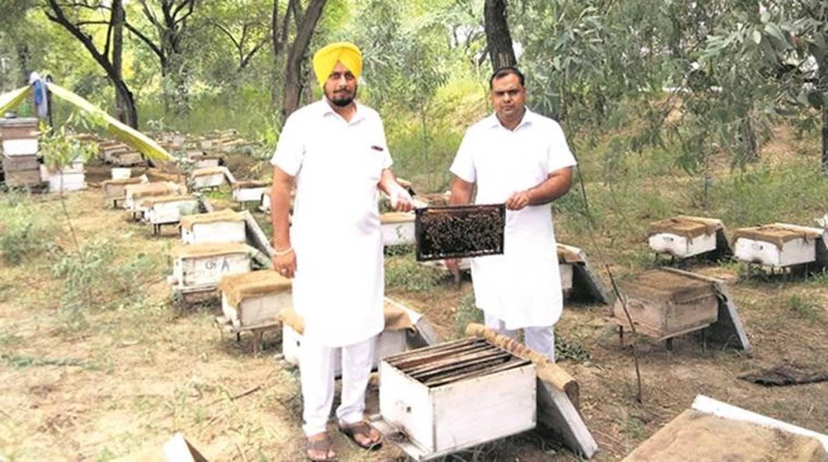 Shuttling for nectar: A rags-to-riches 'Bee-School' success story   India  News,The Indian Express