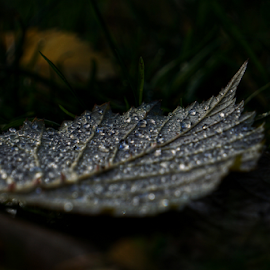 Jewels  by Todd Reynolds - Nature Up Close Leaves & Grasses
