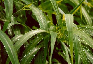 Photo: grass perls