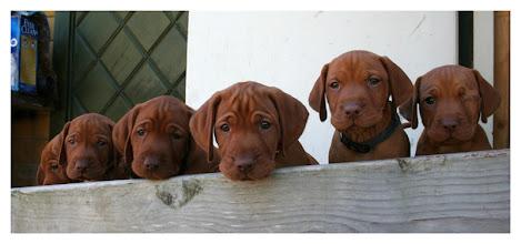 Photo: Grön, Blå, Beige, Röd, Grå, Rosa