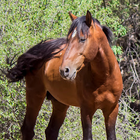 this is my best side by David Shearer - Animals Horses ( wild life, freedom, horse )