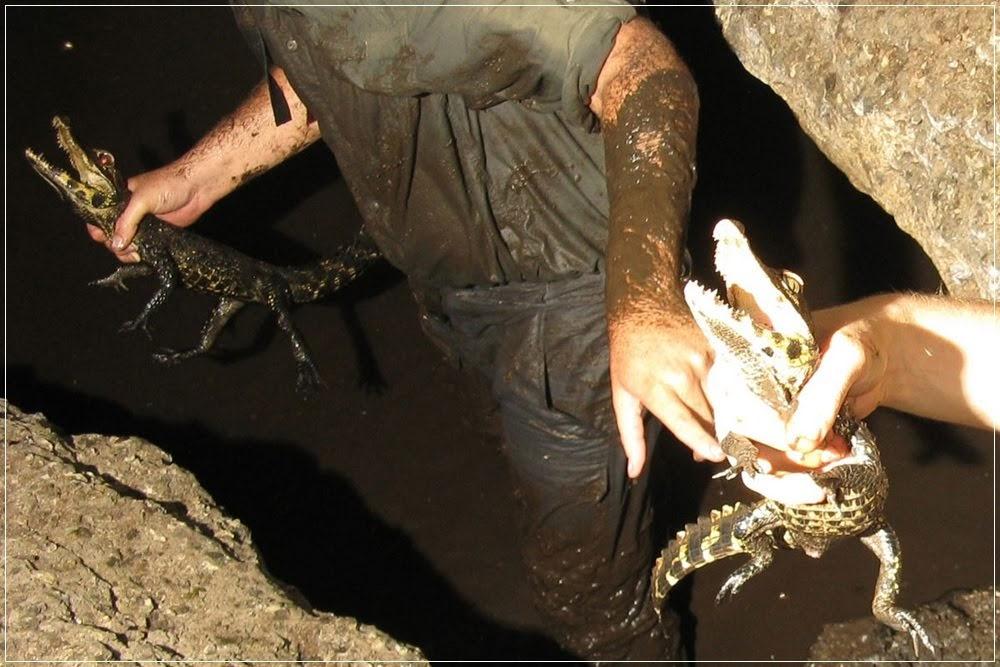 Os crocodilos que habitam as cavernas do Gabão