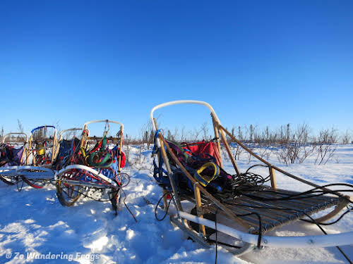 Arctic Canada Inuvik Winter Camping Tundra Dog Sledding // Traditional wood sleds