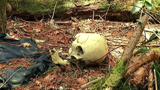 Aokigahara forest dead bodies