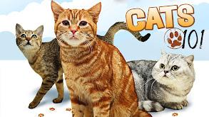 Cats 101 thumbnail