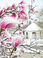 Photo: Pink magnolias and snow in front of a gazebo at Cox Arboretum in Dayton, Ohio.