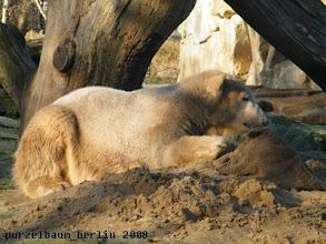 Photo: Knut nimmt sich den Jutesack vor :-)