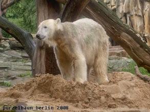 Photo: Bauminspektion beendet und zurueck auf dem Sandhaufen ;-)