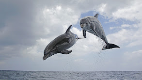 Dolphins: Spy in the Pod thumbnail
