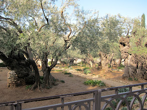 Photo: Garden of Gethsemane