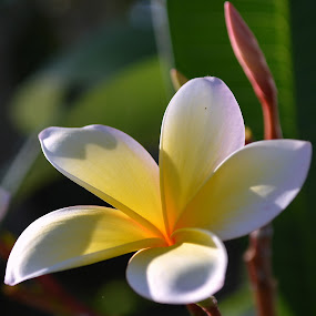 Lai by Colleen Rohrbaugh - Nature Up Close Flowers - 2011-2013 ( tropical, plants, yellow, flowers,  )