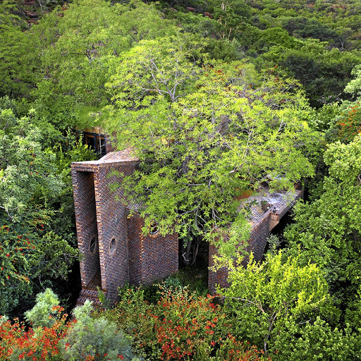 Immersed in the riverine forest of a reserve in the Waterberg mountains, the house was designed to melt into the landscape.