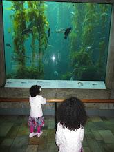 Photo: Aquarium.
