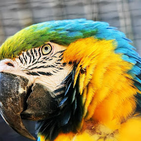 Colorfull by Denis Klicic - Animals Birds ( bird, animals, zoo, colors, colorfull )