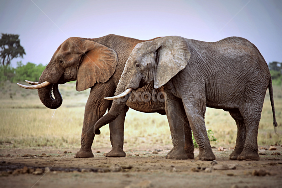The Ellie Brothers by Pieter J de Villiers - Animals Other
