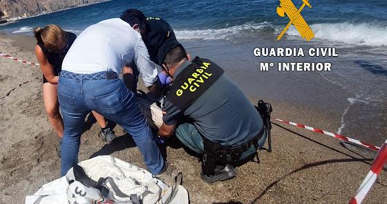 Cómo actuar ante el varamiento de un animal marino en la playa