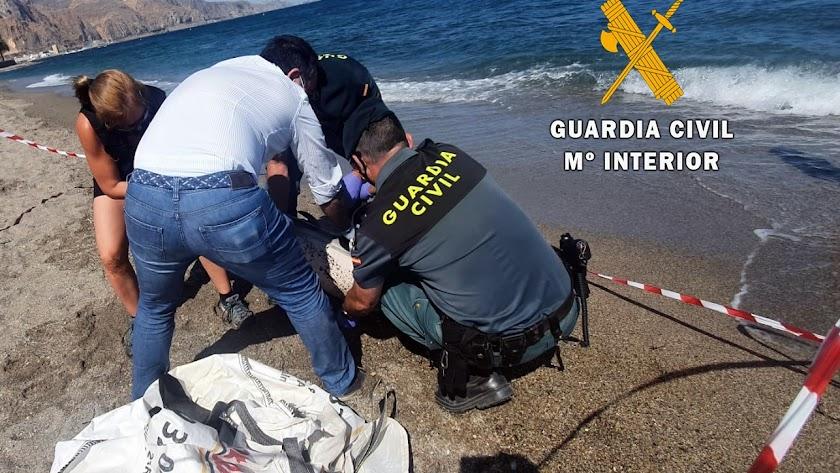 Equinac y la Guardia Civil con el delfín varado en Aguadulce.