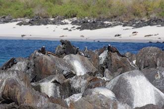 Photo: Iguana council