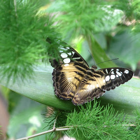 Butterfly 2 by Rose McAllister - Animals Other ( butterfly_insect_leaves_green_trees,  )
