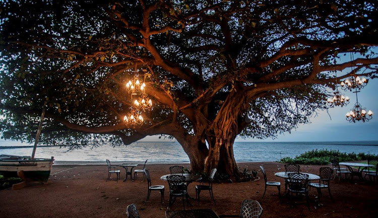 400 year old fig tree, Maputo