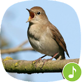 Appp.io - Nightingale bird song