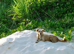 Photo: dog at beach. Tracey Eaton photo