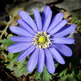 by Keld Helbig Hansen - Flowers Single Flower